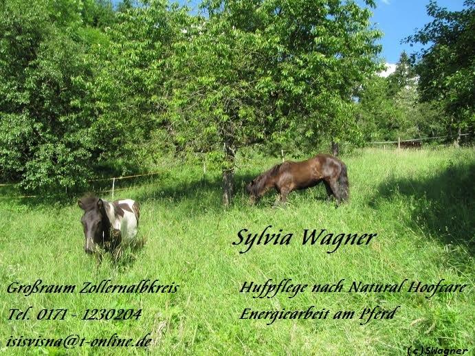 Herzlich Willkommen! Dies ist die Website von Sylvia Wagner, Masseurin, med. Bademeisterin, Fußpflegerin sowie Hufpflegerin nach Natural Hoofcare im Zollernalbkreis. Tel. 0171-1230204